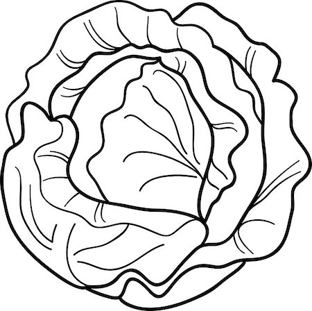 Black and White Cartoon Illustration of Cabbage or Lettuce for Coloring Book Stock Photo - Budget Royalty-Free & Subscription, Code: 400-06747748