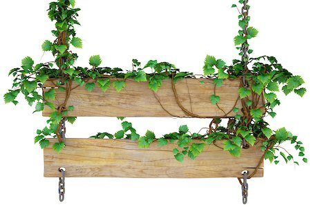 wooden sign hanging on the chains and overgrown with ivy. isolated on white. Stock Photo - Budget Royalty-Free & Subscription, Code: 400-06740636