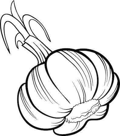 Black and White Cartoon Illustration of Garlic Head Vegetable Food Object for Coloring Book Stock Photo - Budget Royalty-Free & Subscription, Code: 400-06751113