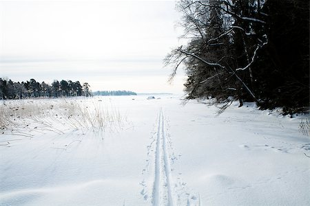 Winter landscape with cross-country skiing tracks in snow on overcast day Stock Photo - Budget Royalty-Free & Subscription, Code: 400-06760575