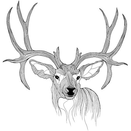 Deer head vector animal illustration for t-shirt. Sketch tattoo design. Stock Photo - Budget Royalty-Free & Subscription, Code: 400-06849781