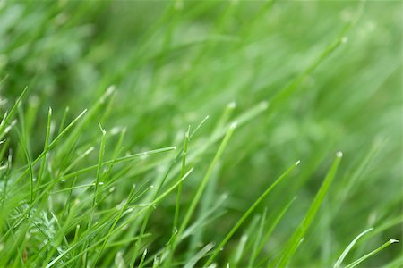 pzromashka (artist) - canted green grass close-up. May be used as background Stock Photo - Budget Royalty-Free & Subscription, Code: 400-06855880