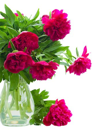 peony art - peony flowers in vase isolated on white background Stock Photo - Budget Royalty-Free & Subscription, Code: 400-06856817