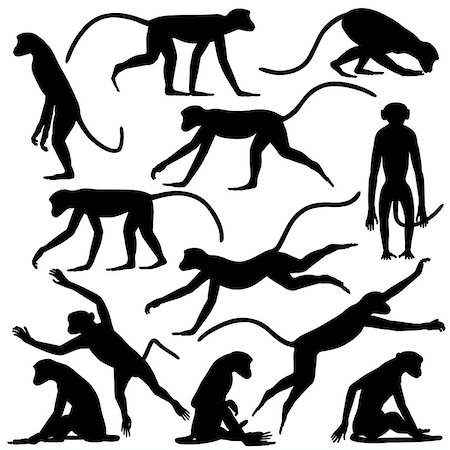 Set of editable vector silhouettes of langur monkeys in different poses Stock Photo - Budget Royalty-Free & Subscription, Code: 400-06851653