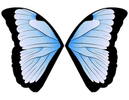 vector pair of wings blue butterfly. illustration Stock Photo - Budget Royalty-Free & Subscription, Code: 400-06878533
