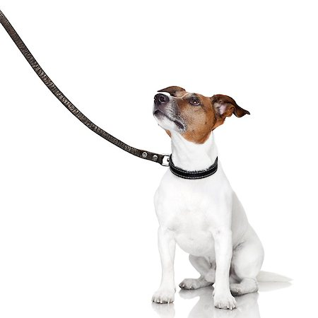 bad behavior dog being punished by owner Stock Photo - Budget Royalty-Free & Subscription, Code: 400-06916473