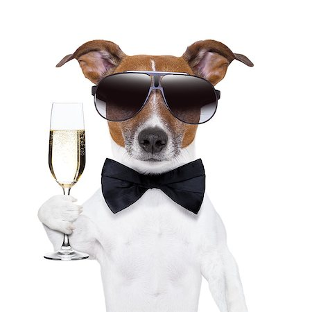 cheers dog with  a glass of champagne Stock Photo - Budget Royalty-Free & Subscription, Code: 400-06927172
