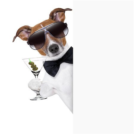 dog toasting with martini glass behind a blank placard banner Stock Photo - Budget Royalty-Free & Subscription, Code: 400-06928436