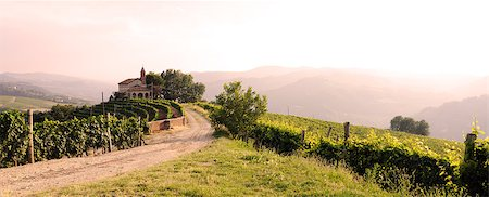 road landscape - landscape with vineyards and church Stock Photo - Budget Royalty-Free & Subscription, Code: 400-06952095