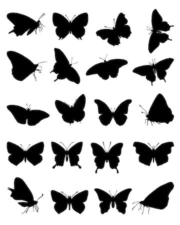 Black silhouettes of butterflies on a white background, vector Stock Photo - Budget Royalty-Free & Subscription, Code: 400-07047568