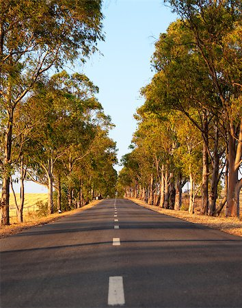 road landscape - Deserted straight tree-lined tarred road with central markings disappearing in to the distance Stock Photo - Budget Royalty-Free & Subscription, Code: 400-07092124