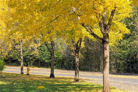 Yellow Falling Leaves from Residential Neighborhood Beech Trees Along the Road in Autumn Stock Photo - Budget Royalty-Free & Subscription, Code: 400-07114718