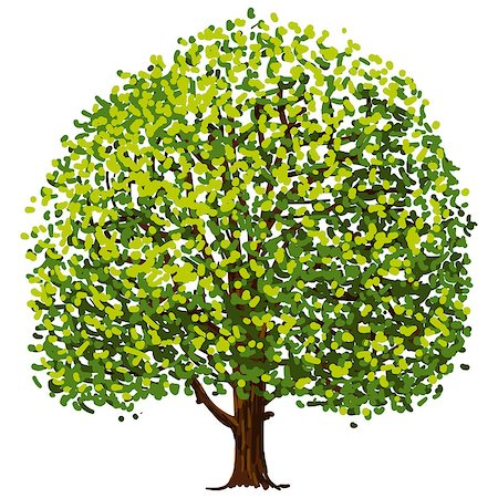 Illustration of tree with green leaves isolated on white background Stock Photo - Budget Royalty-Free & Subscription, Code: 400-07207973