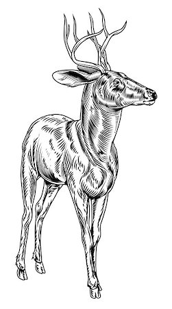 deer hunt - A vintage style woodcut deer illustration of a buck or stag proudly standing and looking into the distance Stock Photo - Budget Royalty-Free & Subscription, Code: 400-07214485
