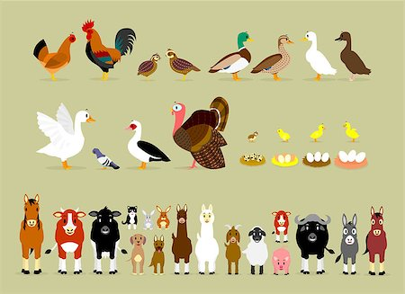 Cute Cartoon Farm Animal Characters including Birds (Hen, Rooster, Brown Quails, Mallard Ducks, Domestic Ducks, Goose, Pigeon, Muscovy Duck, Turkey, also Baby and the eggs of Quail, Chicken, Duck, and Goose) and Mammals in Front View version (Sheep, Llama, Donkey, Goat, Alpaca, Pig, Horse, Cow, Mule, Calf, Cow, Buffalo, Great Dane Dog, German Shepherd Dog, Cat, Hare, and Rabbit) Stock Photo - Budget Royalty-Free & Subscription, Code: 400-07217616