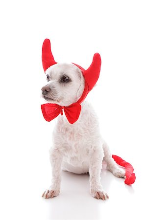 Naughty devil dog in costume horns and tail.  White background. Stock Photo - Budget Royalty-Free & Subscription, Code: 400-07210665
