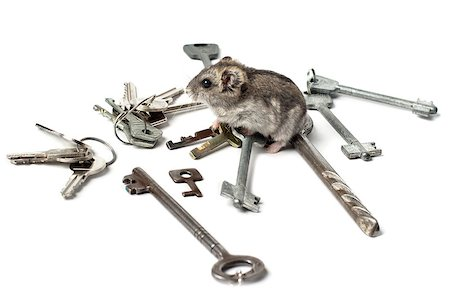 Djungarian Hamster on the old keys Stock Photo - Budget Royalty-Free & Subscription, Code: 400-07210703