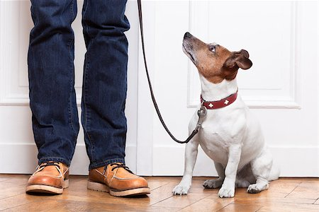 dog looking up to owner waiting to go walkies Stock Photo - Budget Royalty-Free & Subscription, Code: 400-07257116