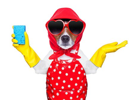 fun happy colorful background images - housewife dog with rubber gloves and a blue sponge Stock Photo - Budget Royalty-Free & Subscription, Code: 400-07265852