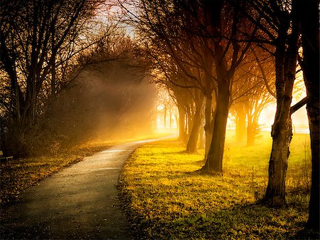 road landscape - Image of a path with trees, meadows and sunbeams Stock Photo - Budget Royalty-Free & Subscription, Code: 400-07304720