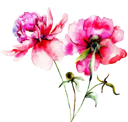 peony illustrations - Red Peony flowers, Watercolor painting Stock Photo - Budget Royalty-Free & Subscription, Code: 400-07308484
