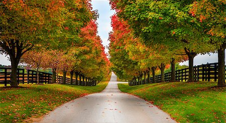 road landscape - Road between horse farms in rural Kentucky Stock Photo - Budget Royalty-Free & Subscription, Code: 400-07301501