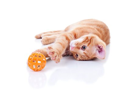 Cat playing with toy on white Stock Photo - Budget Royalty-Free & Subscription, Code: 400-07316346
