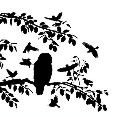 Editable vector silhouettes of songbirds mobbing an owl with all birds as separate objects Stock Photo - Budget Royalty-Free & Subscription, Code: 400-07319551