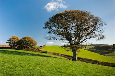 The English tree stand alone in the countryside Stock Photo - Budget Royalty-Free & Subscription, Code: 400-07313320