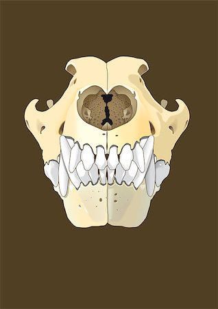 dog x-ray - skull of dog section with bones x ray Stock Photo - Budget Royalty-Free & Subscription, Code: 400-07406878