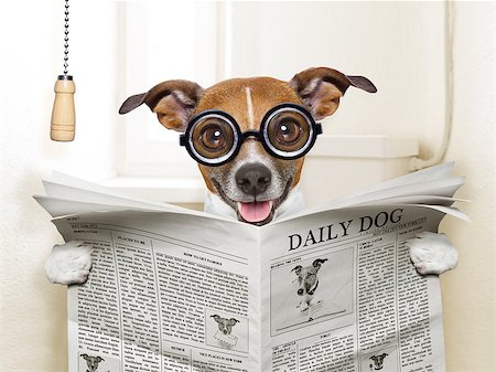 crazy silly dog sitting on toilet and reading magazine Stock Photo - Budget Royalty-Free & Subscription, Code: 400-07417564