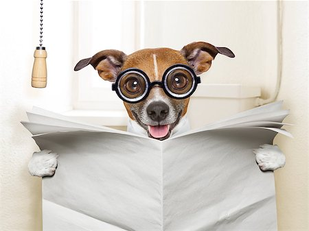 crazy silly dog sitting on toilet and reading magazine Stock Photo - Budget Royalty-Free & Subscription, Code: 400-07417565
