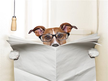 dog sitting on toilet and reading magazine Stock Photo - Budget Royalty-Free & Subscription, Code: 400-07417563