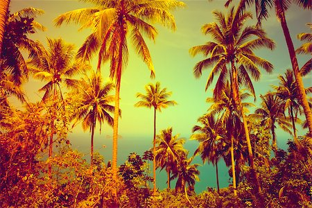 View of nice tropical background with coconut palms. Thailand Stock Photo - Budget Royalty-Free & Subscription, Code: 400-07410515