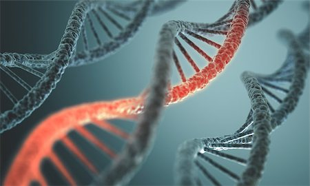 Long structure of the DNA double helix in depth of view. Stock Photo - Budget Royalty-Free & Subscription, Code: 400-07427267