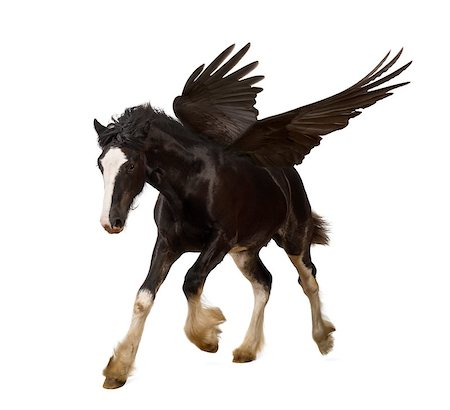 Winged stallion (Pegasus) galloping Stock Photo - Budget Royalty-Free & Subscription, Code: 400-07471421