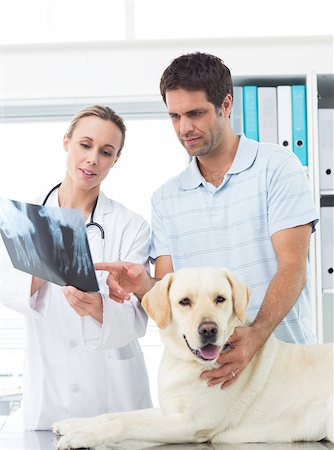 dog x-ray - Female vet and pet owner discussing Xray of dog in clinic Stock Photo - Budget Royalty-Free & Subscription, Code: 400-07473604
