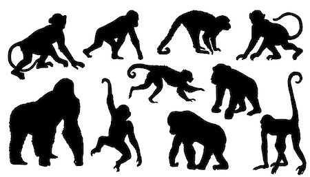 monkey silhouettes on the white background Stock Photo - Budget Royalty-Free & Subscription, Code: 400-07550023