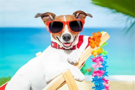 dog in heat - dog relaxing on a fancy red deckchair Stock Photo - Budget Royalty-Free & Subscription, Code: 400-07576500
