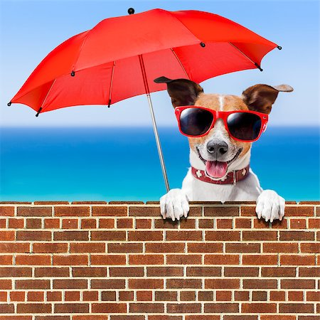 dog in heat - summer vacation dog behind stonewall with red umbrella Stock Photo - Budget Royalty-Free & Subscription, Code: 400-07628826