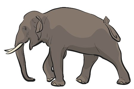 Editable vector illustration of a walking Asian elephant Stock Photo - Budget Royalty-Free & Subscription, Code: 400-07718402