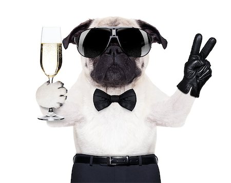 pug with a  champagne glass and victory or peace fingers toasting for new year Stock Photo - Budget Royalty-Free & Subscription, Code: 400-07720608