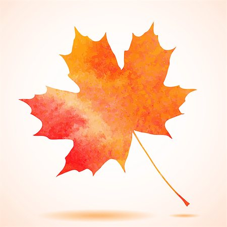 Orange watercolor painted vector autumn maple leaf background. Also available as a Vector in Adobe illustrator EPS format, compressed in a zip file. The vector version be scaled to any size without loss of quality. Stock Photo - Budget Royalty-Free & Subscription, Code: 400-07774823