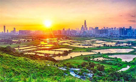 sunset in hong kong countryside, rice field and modern office buildings Stock Photo - Budget Royalty-Free & Subscription, Code: 400-07821254