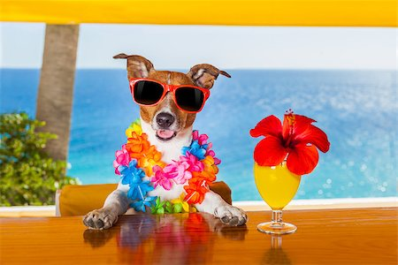 dog in heat - funny cool dog drinking cocktails at the bar in a  beach club party with ocean view Stock Photo - Budget Royalty-Free & Subscription, Code: 400-07822390