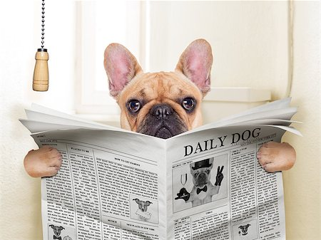 fawn french bulldog dog sitting on toilet and reading magazine Stock Photo - Budget Royalty-Free & Subscription, Code: 400-07836753