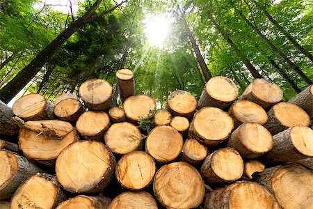 Trunks of trees cut and stacked in the foreground, green forest in the background with sun rays Stock Photo - Budget Royalty-Free & Subscription, Code: 400-07838035