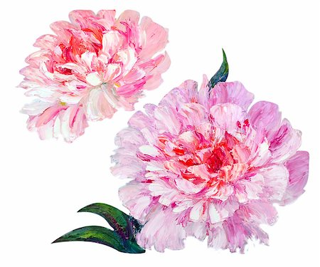 painting a peony bud - Peonies isolated on white, oil painting Stock Photo - Budget Royalty-Free & Subscription, Code: 400-07902803