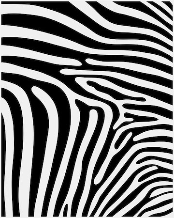 Black and white pattern skin of zebra ,vector Stock Photo - Budget Royalty-Free & Subscription, Code: 400-07924487