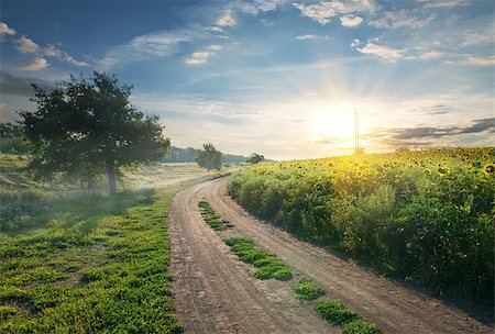 road landscape - Country road near the field with sunflowers Stock Photo - Budget Royalty-Free & Subscription, Code: 400-07924841